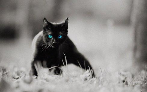 black cat action
