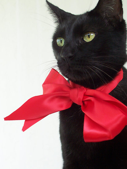 black cat red bow