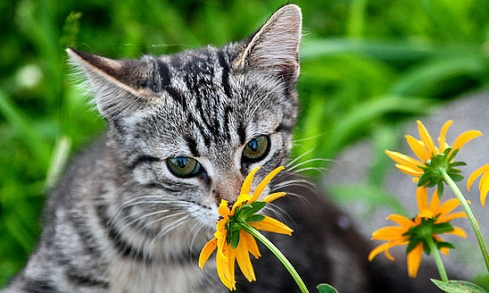 cat-sniffing-flower