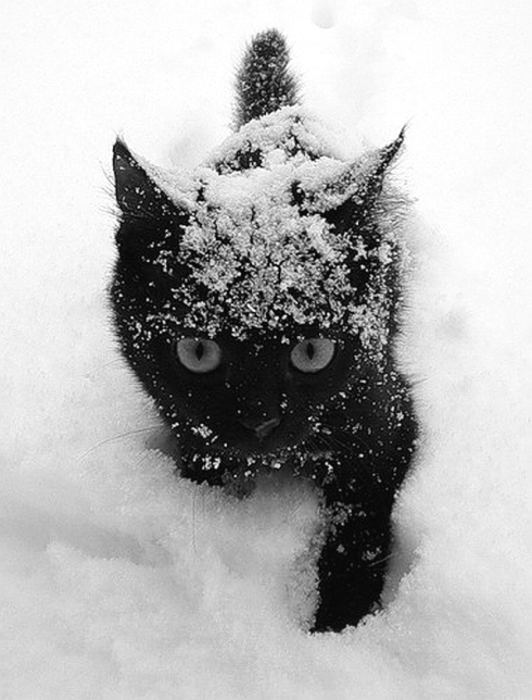 black-cat-white-snow